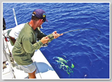Florida keys lobsterand dolphin fishing for Dolphin fishing florida