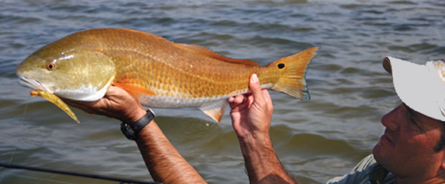 Tampa Bay info on lures and fly fishing tackle